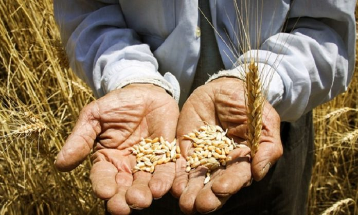 Iranian regime's claims of wheat self-sufficiency are false