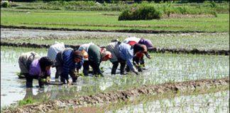 Working women in rural Iran