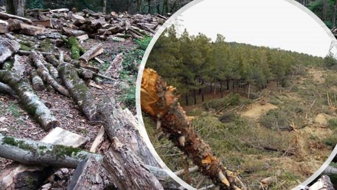 dying forests due to mismanagement and destruction of the environment by the Iranian regime and its IRGC