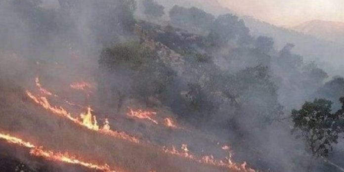 Iran's forests of fire