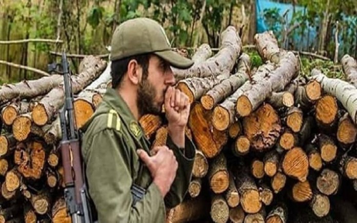 Iran's IRGC destroys Iran's forests