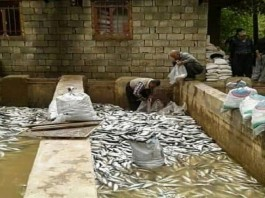 Power outages have been very damaging to some agricultural activities in Iran like fish farming.