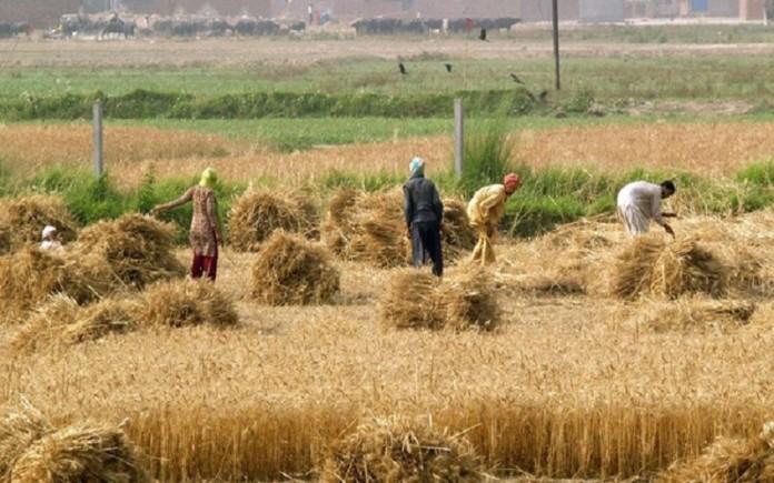 Iran's critical food security situation